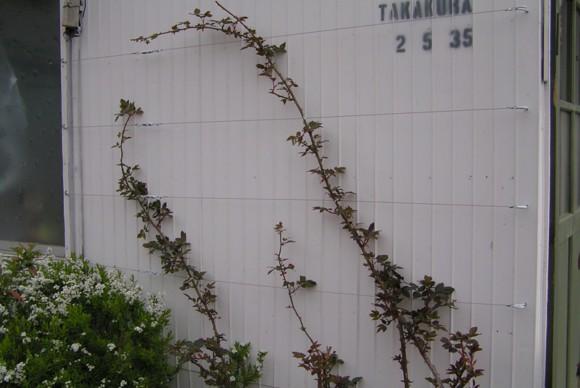 蔓薔薇の植栽。外壁は淡い白で塗装。庭に使う鉢やツタを這わせるワイヤーなどは身近な建築資材を使い設置。