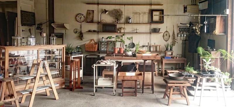 多肉植物,観葉植物,鬼根,ジャンク,古道具,パキポディウム
