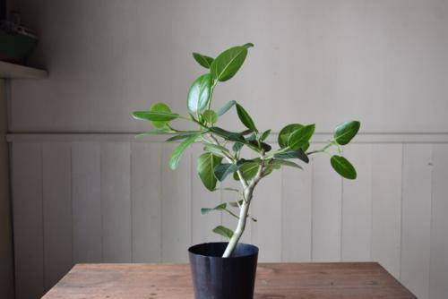 植物と古道具展 PLANTSその2
