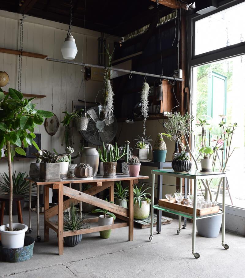 単体で見ていたアンティーク家具も味わいが心地よく感じられたり、質感などがものと調和して、溶け込み馴染んでいく様子が感じられ、一層家具にも植物にも愛着が湧いてくるようです。