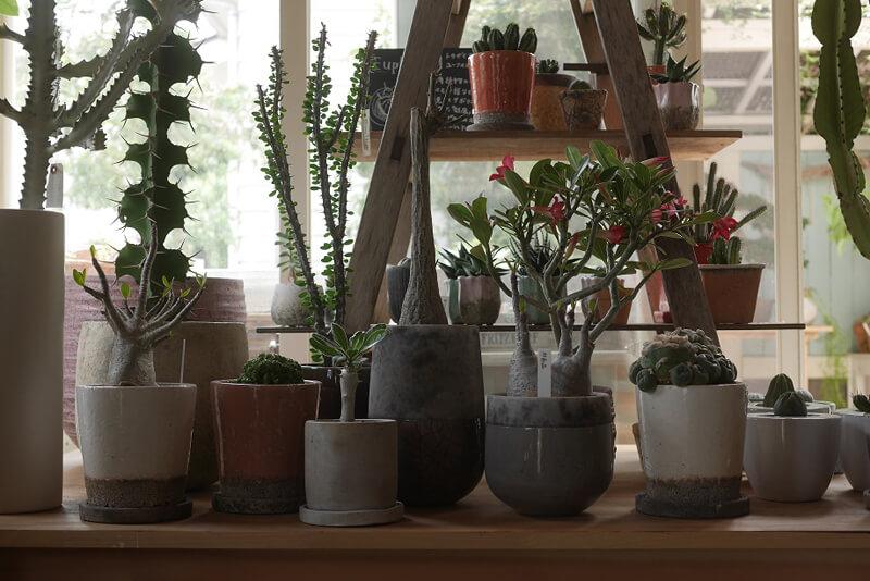 様々な形と種類の植物と、アンティーク家具たち。インテリアに合わせた時にどう楽しめるかディスプレイします。