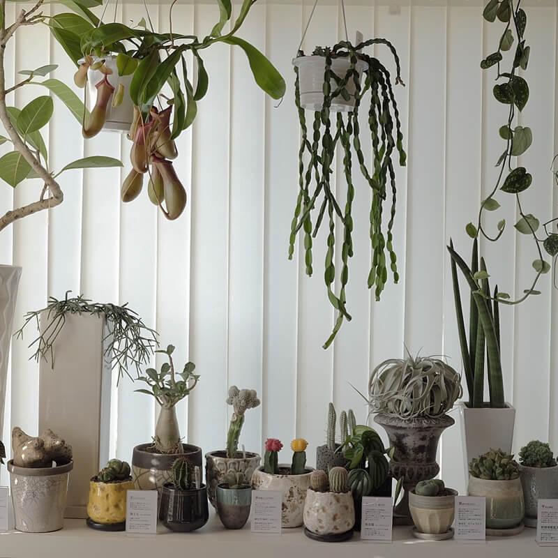 飾り方や見立て方などで様々な表情を魅せる植物たち。育てる楽しみと暮らしの一部に溶け込むインテリアを楽しんでください。