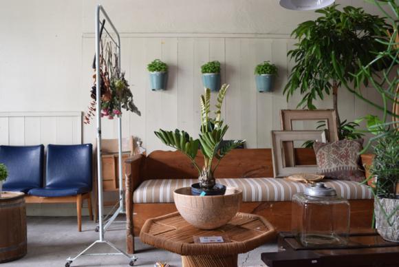 REFACTORY antiques内でインドアグリーンやテラスなどでの植物の楽しみ方を作れればと思っています。
