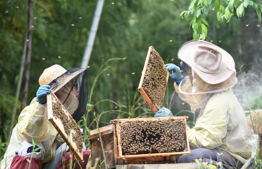 自然環境と密接な関係のある養蜂も手がけ、青梅の山々の花とOme Farmの野菜やハーブの花を蜜源とする蜂蜜は、加熱処理を行わないため、豊かな香りと自然な甘みを楽しめます。