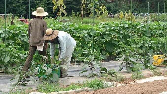Ome Farmさんのお手伝いなどをしています。農業は単調な作業が多いですが、とてもクリエイティブな仕事だと思っています。
