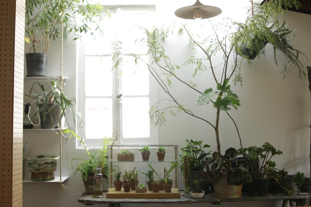 造園外構を行うBROCANTEさんの2Fに植物を身近に感じられる事を発信するウェブメディアの実店舗Seedingが5月にオープンしました。