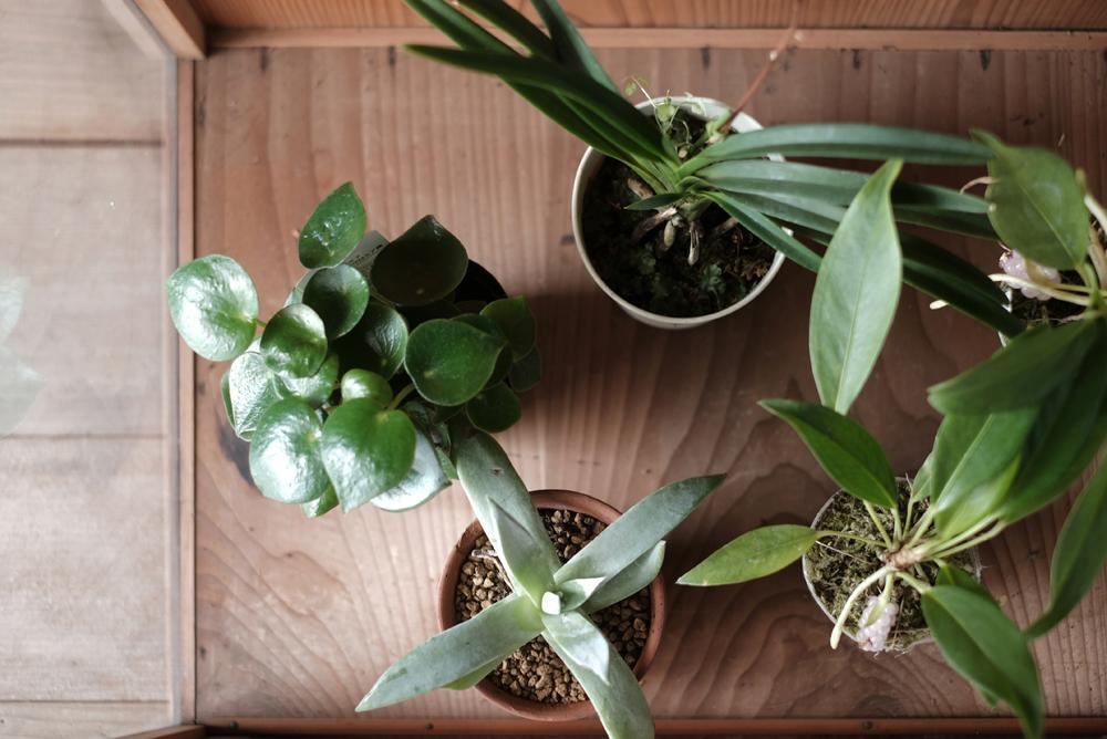 植物と合わせることで新たな姿を感じていただけるようなモノ