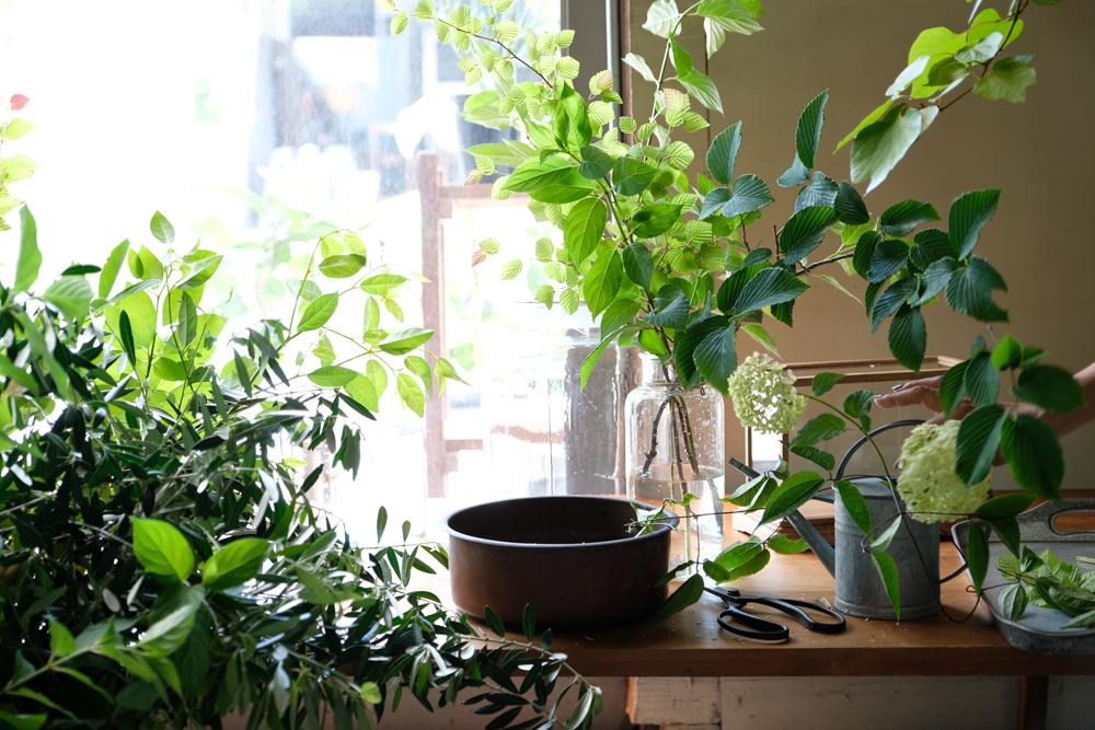 澄んだ水に植物を挿してみるワークショップ