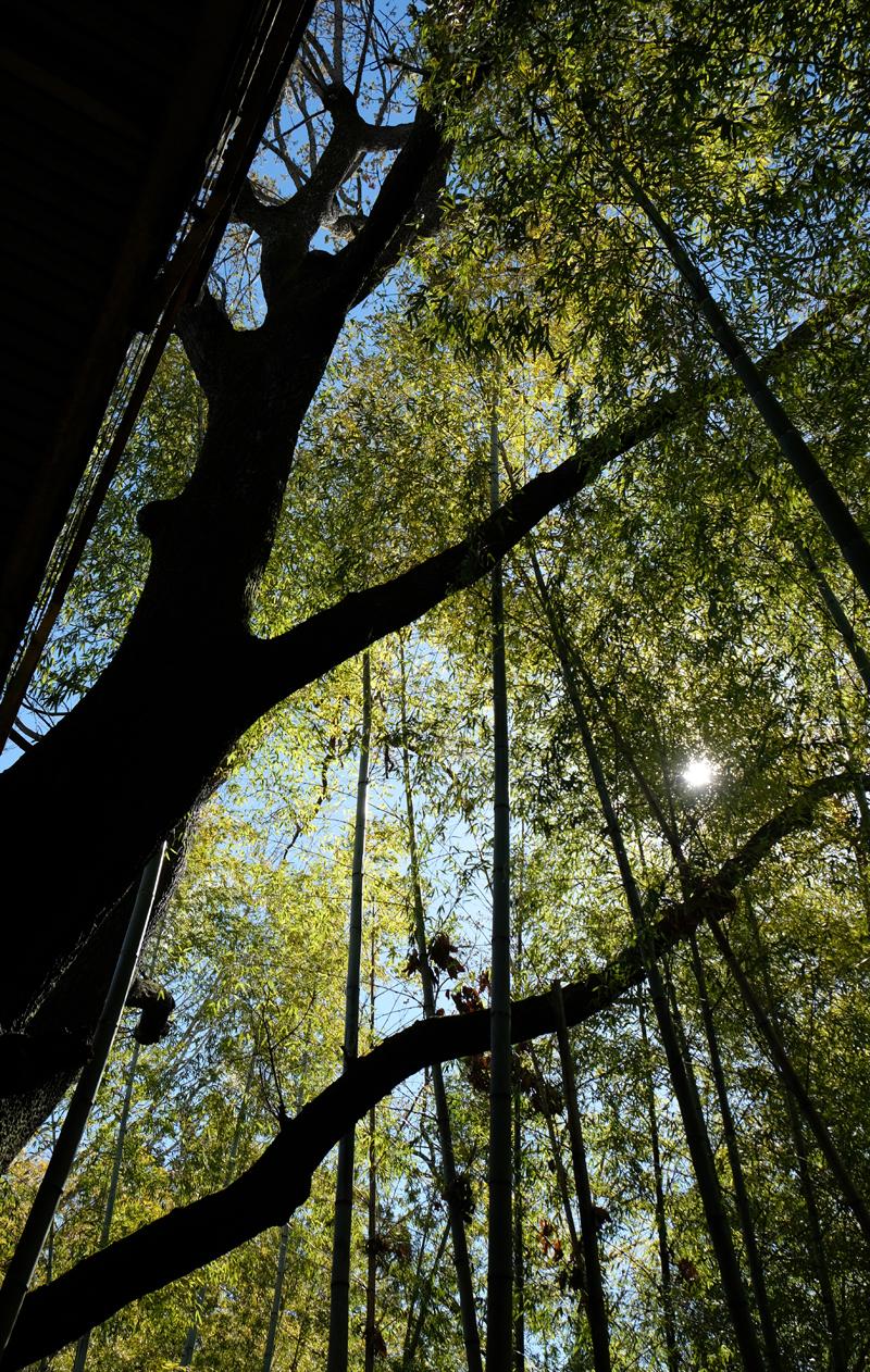 最初に取りかかったのは竹藪の整備。道からの景色を塞ぎ、ほとんど地面まで光が届かないほど竹に覆われていた川と道路の間の伐採をしました。