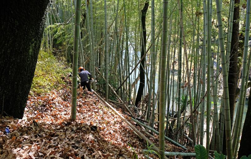 竹藪を切り進める力丸造園、西力太