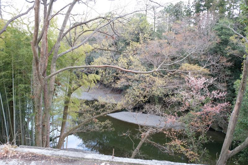 竹藪過ぎて気付なかった山桜やもみじなどの元からそこにあった生態系も感じられるようになりました。