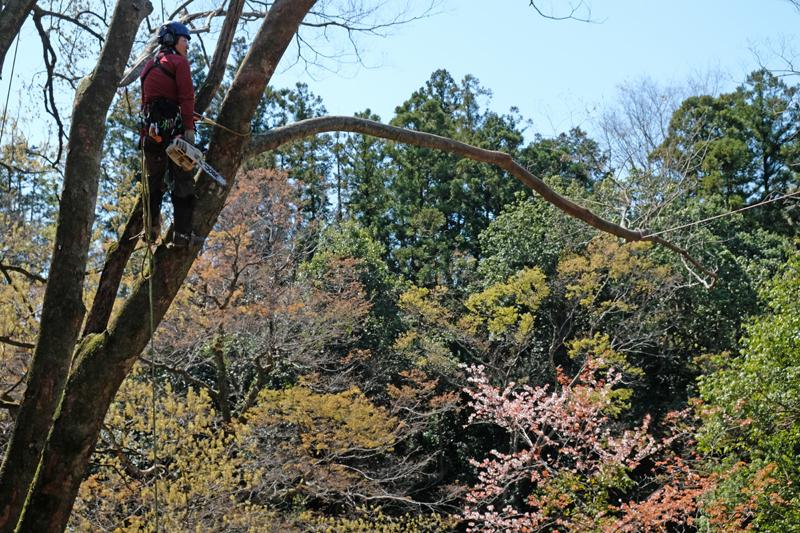 それは樹木に関する知識が豊富なうえ、高い木の上で剪定やメンテナンスが行える命がけの樹木医です。