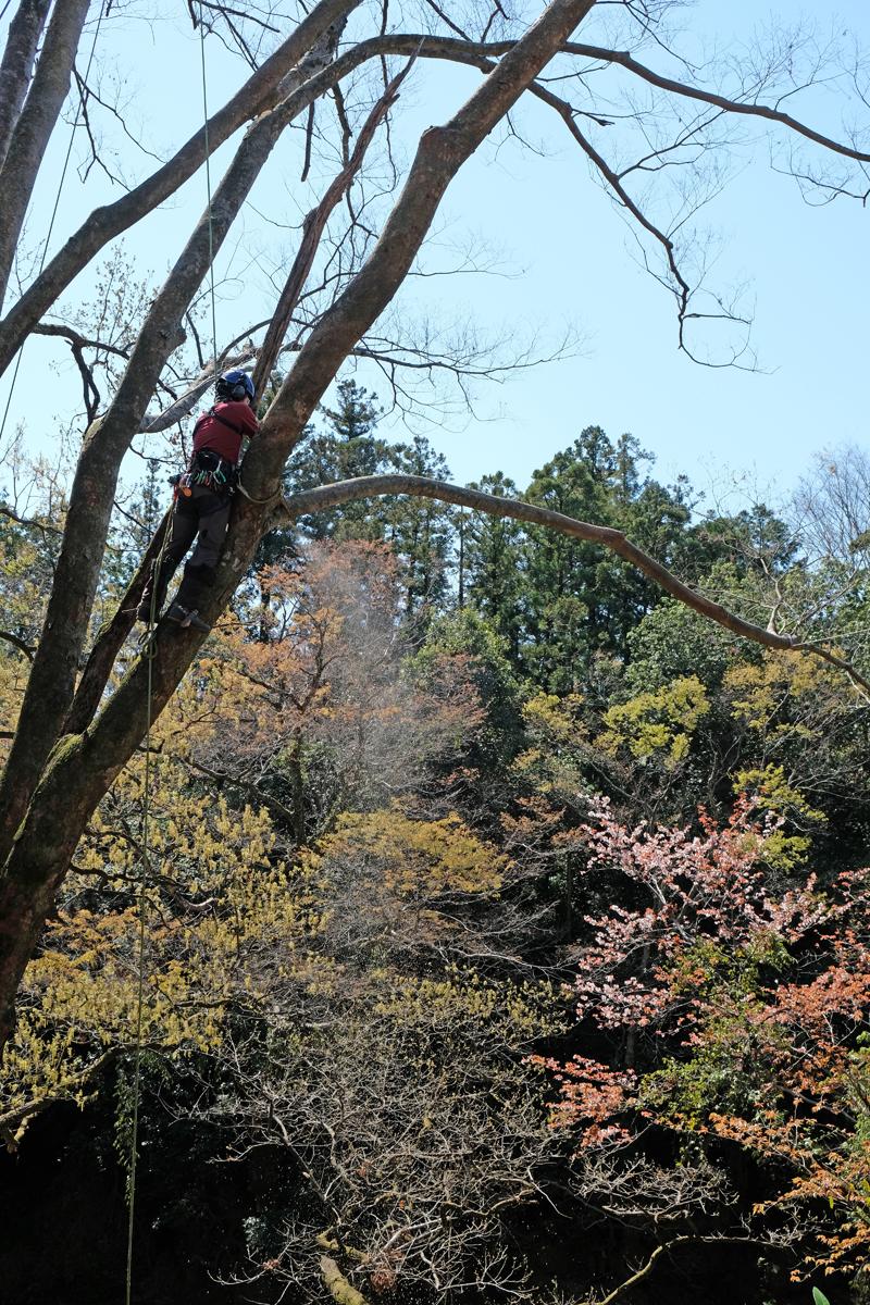 子供の頃の木登り感覚の延長線上に今の自分があると話します。
