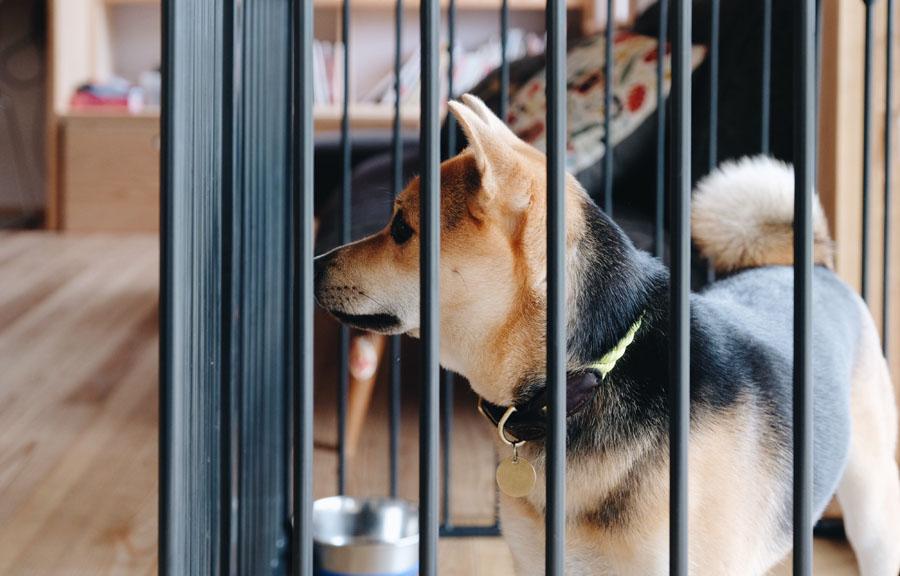 飯能に移ってから、犬を飼い始めあちこち散歩するように。
