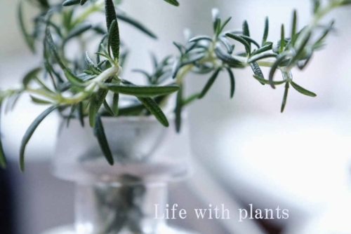 【STUDIO】Life with plants